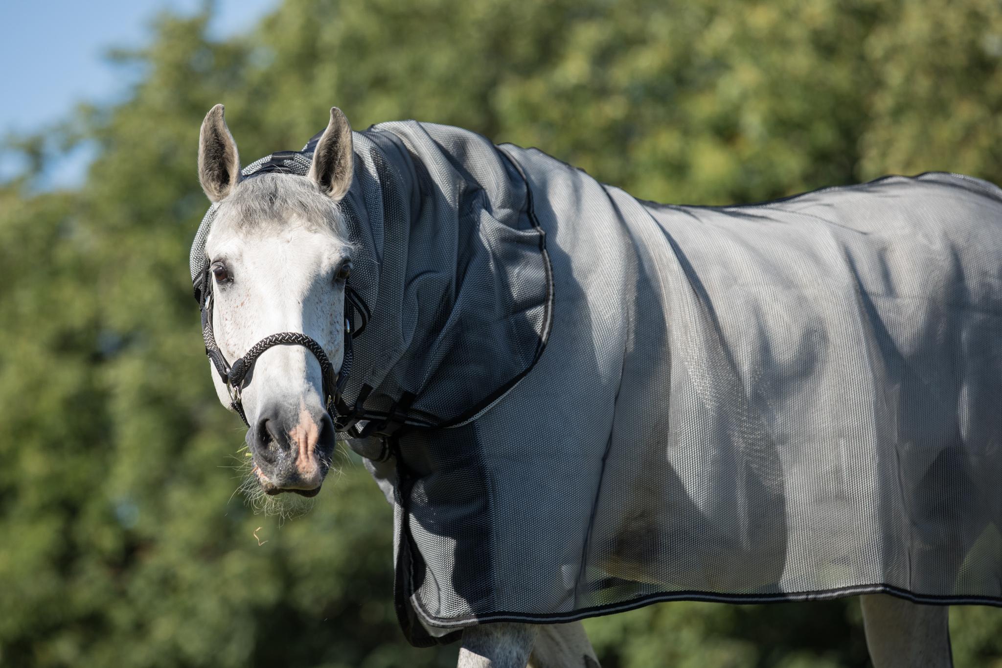 equine-microtec-marvin-vroomen-200601-FS193992